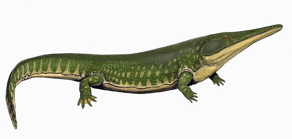 Архегозавр