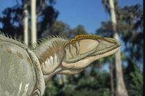 Carcharodontosaurus 02