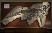 Tethyshadros skeleton.jpg