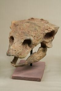The Childrens Museum of Indianapolis - Cast skull of Gastonia - detail.jpg