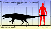 Ornithosuchus-size
