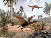 Pterodactylus image
