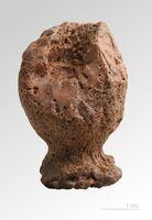 Siphonia pyriformis