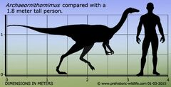 Archaeornithomimus-size f96f