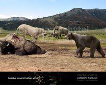 Arctodus simus Panthera atr-738x591