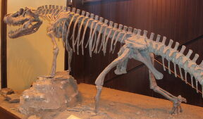 1024px-Saurosuchus galilei Ischigualasto (1).jpg
