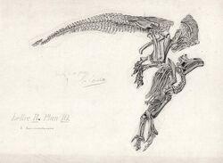 Iguanodon художник Gustave Lavalette (1)