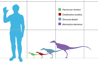 Alvarezsaurid scale martyniuk.png