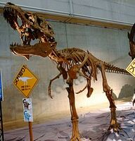 Lythronax skeleton