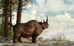 Шерстистый носорог 3