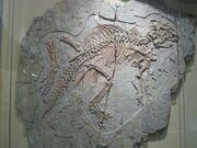 Psittacosaurus sinensis 02.jpg