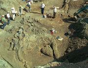 Camarasaurus fossil 02.jpg