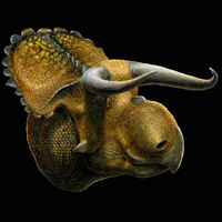 Nasutoceratops-1-m