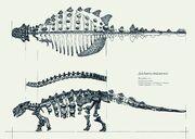 Short-legs-animal-anatomy.jpg