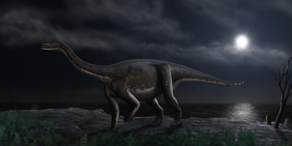 Prosauropoda image.jpg