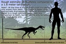 Nuthetes-size