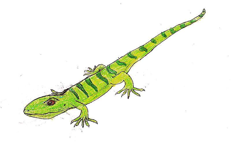 Баваризавр