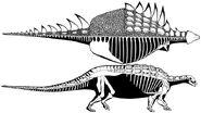 Gastonia-skelet-2-m