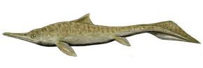 Mixosaurus BW 2.png