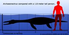 Archaeonectrus-size