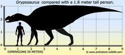 Gryposaurus-size.jpg