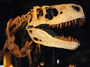 Аппалачиозавр 3