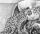 Европейский леопард