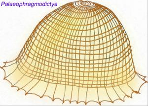 Палеофрагмодиктия 2