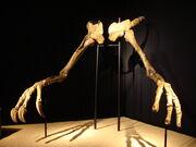 Deinocheirus hand 01.jpg