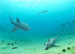 Sphenodus longidens attack Callorhinchus. Notidanoides on the background..jpg