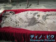 Equijubus fossil.jpg