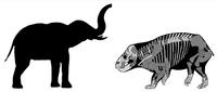 Сравнение размеров Лисовиции со слоном