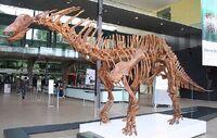 640px-Amargasaurus1 Melb Museum email