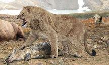 Cave-lion-490x290 126924 1