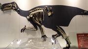 Altirhinus fossil.jpg
