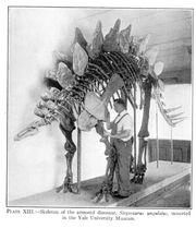 Large lull stegosaurus.jpg