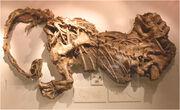 Massospondylus fossils.jpg