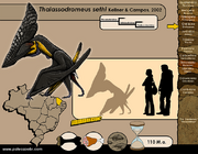 Thalassodromeus-size.png
