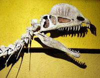 Дилофозавр череп 2