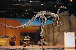 Archaeornithomimus.jpg
