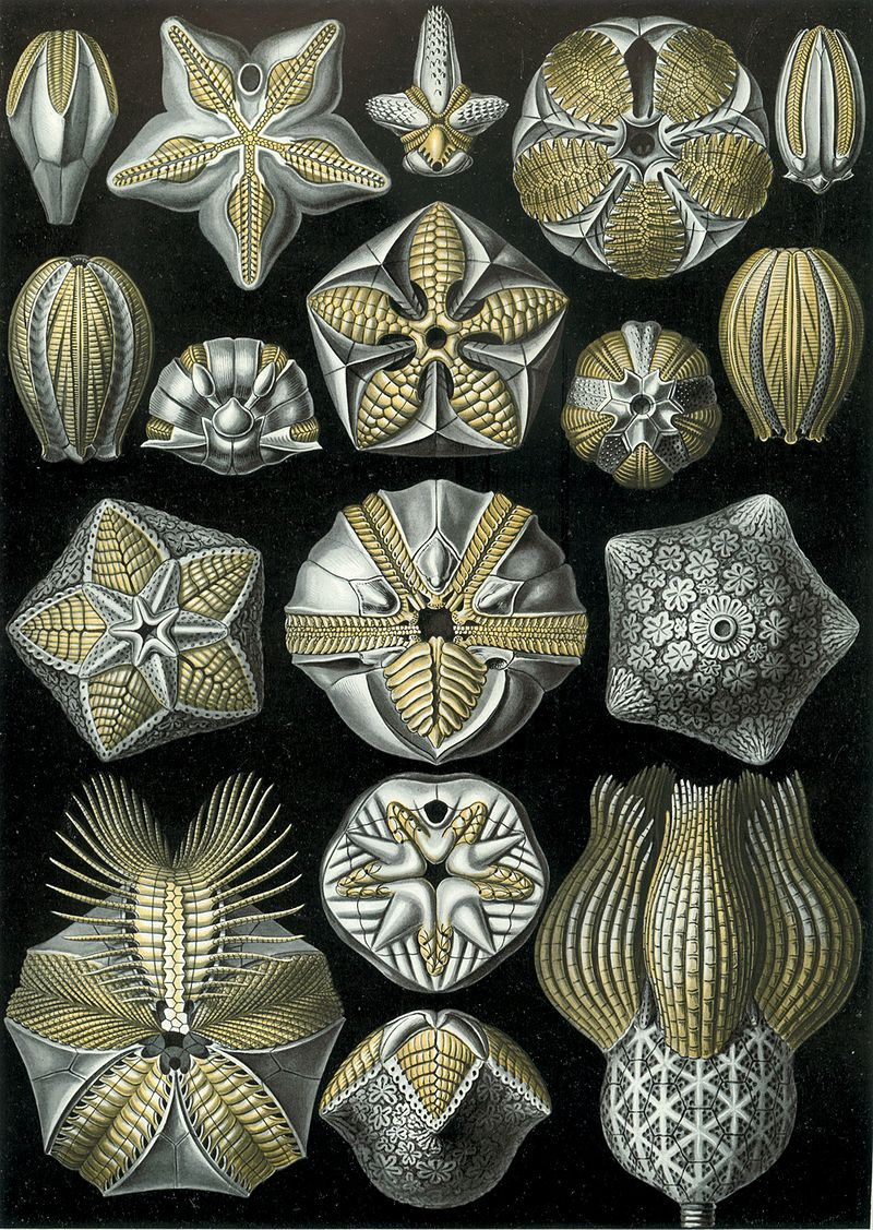 Бластоидеи