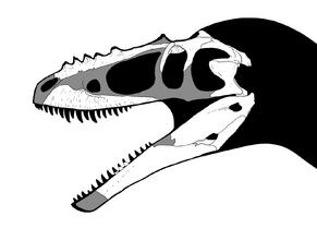 Alioramus skull steveoc.png