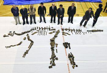 Hadrosaurid , Hokkaido,.jpg