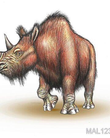 Шерстистый носорог 2.jpg