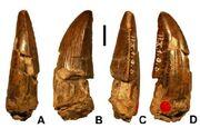 Ostafrikasaurus-teeth-large.jpg