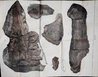 Базилозавр кости 3