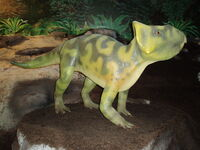 Leptoceratops 078(1)