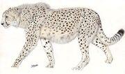 Giant cheetah by jagroar.jpg