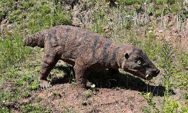 Dinosaur by roky320-d5bg5dp.jpg