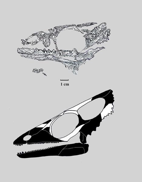 Вапитизавр